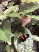 Butterfly near tr...