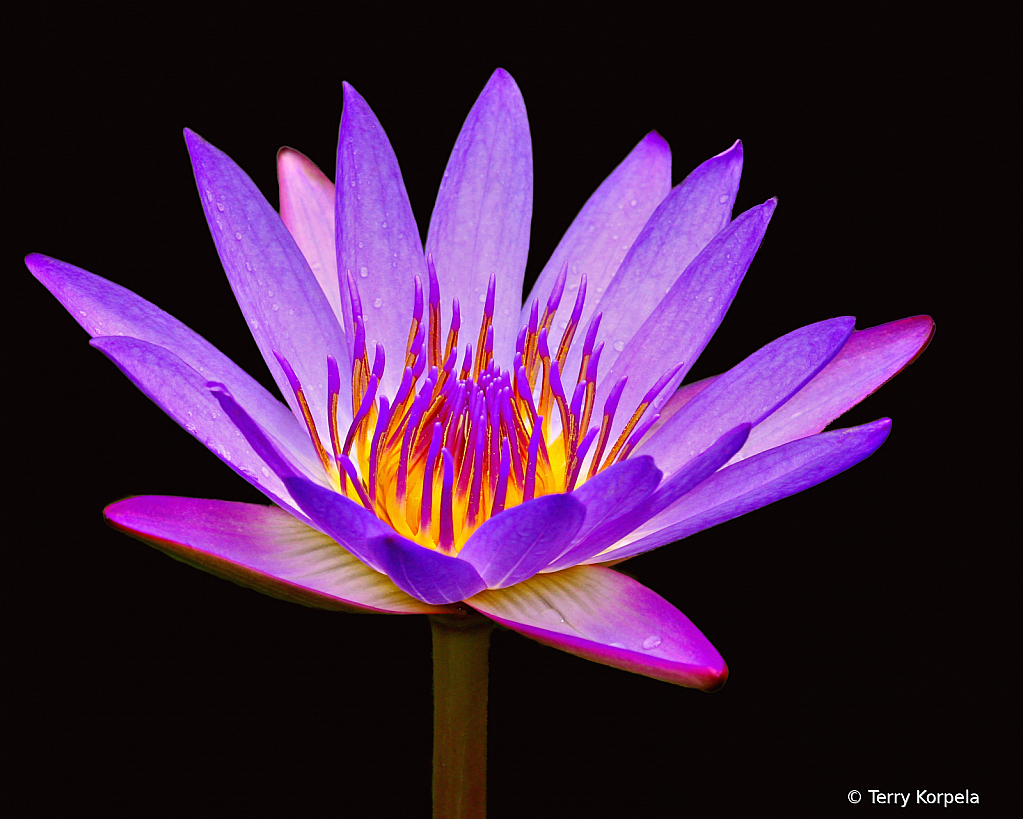 Kula Botanical Garden, Maui - ID: 15896632 © Terry Korpela