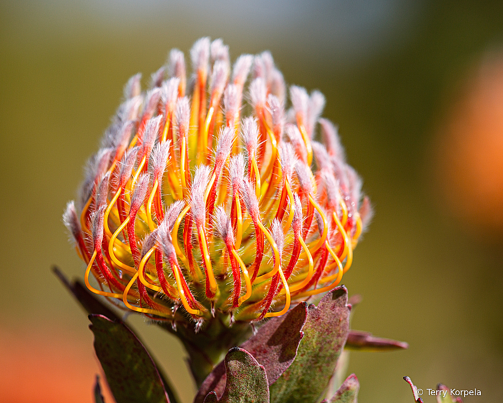Santa Cruz Botanical Garden - ID: 15900820 © Terry Korpela