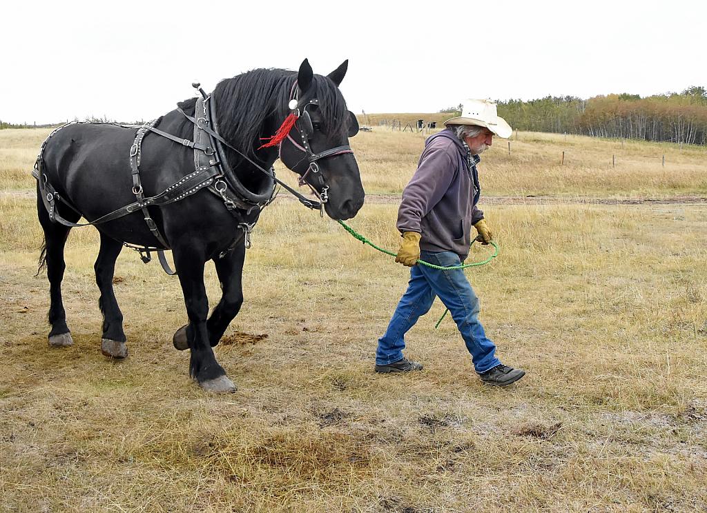 Cowboy and Horse - ID: 15900912 © Doug Newman