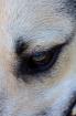 Eye of the Loki