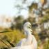 2Love Egrets #2391 - ID: 15902703 © Zelia F. Frick