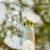 2Green Eyes - ID: 15902706 © Zelia F. Frick