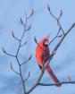 Cardinal and the ...