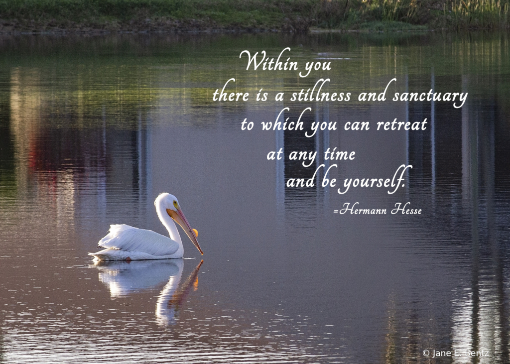 Stillness & Sanctuary