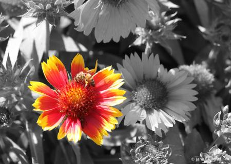 Orange Flower - 2021 Photo Challenge - Day 9