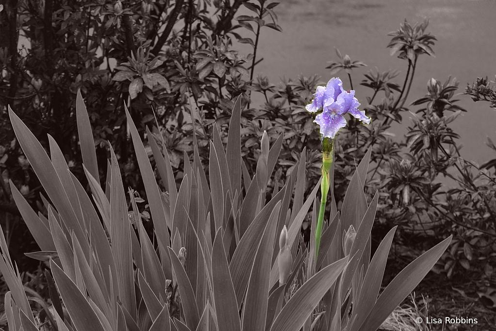 2021 Photo Challenge - Rainy Day Flowerbed