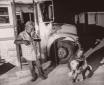 Dog Transport for...