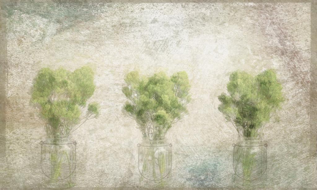 Trio of Greens