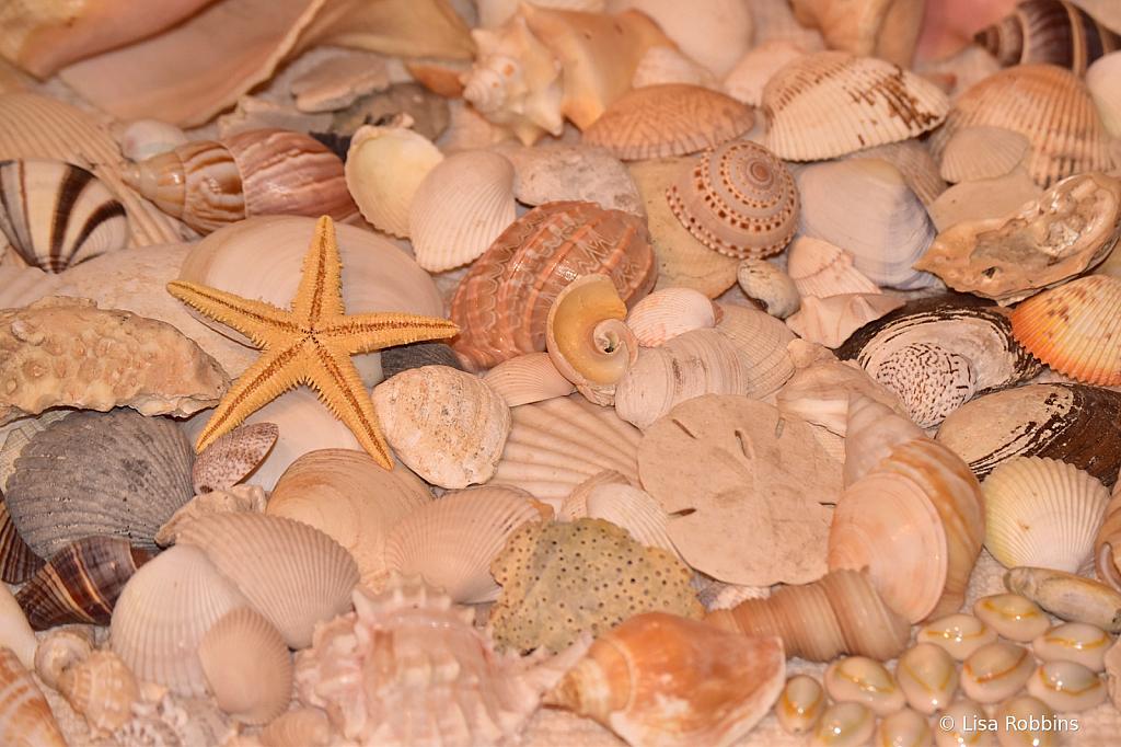 Photo Challenge - Day 14 - Sea Shells