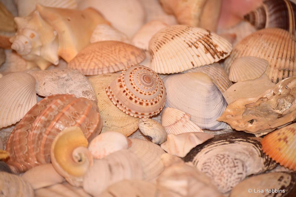 2021 Photo Challenge-Day 14 - More Sea Shells