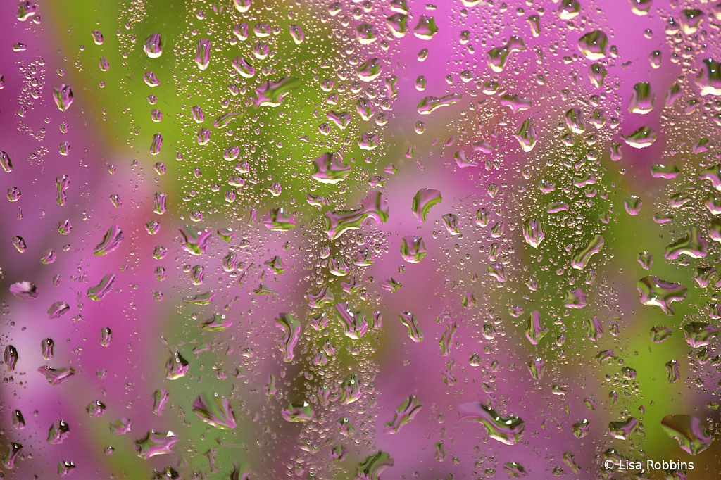2021 Photo Challenge - Droplets on a Window