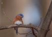 Bluebird Between ...
