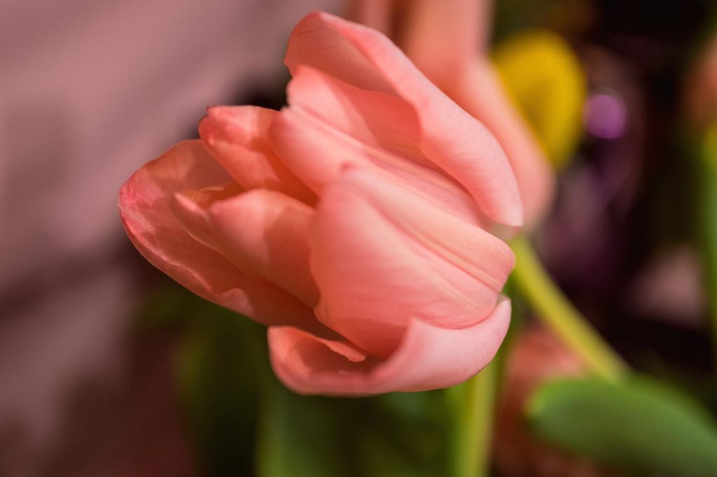 Flower - ID: 15911924 © Paula Xavier