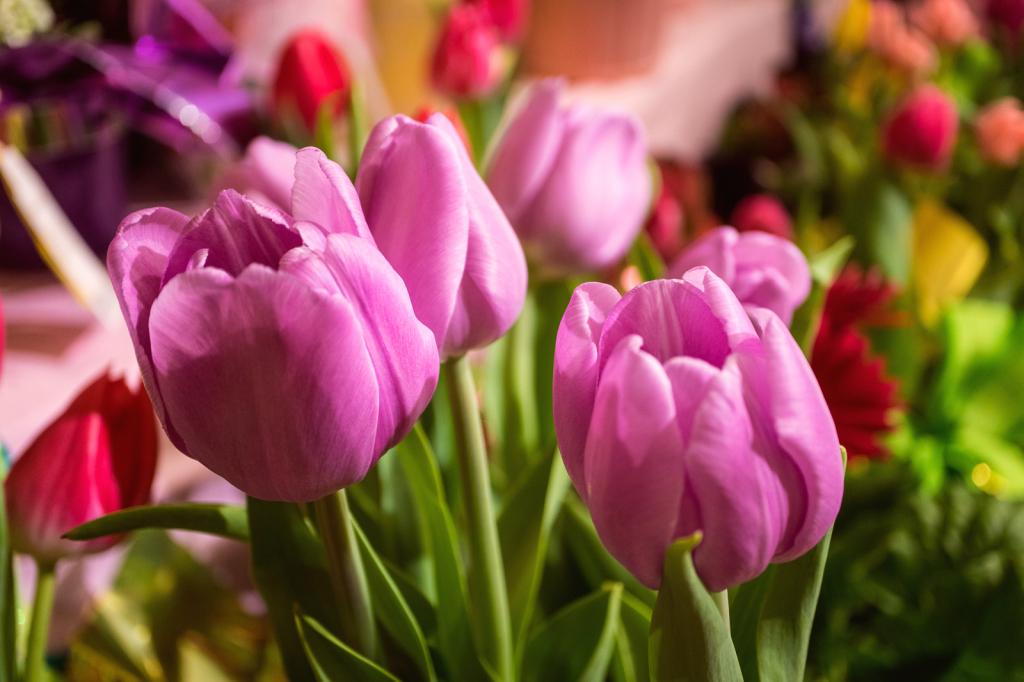 Flowers - ID: 15911925 © Paula Xavier