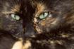 Cat-apathy
