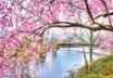 Blossoms at Fall ...