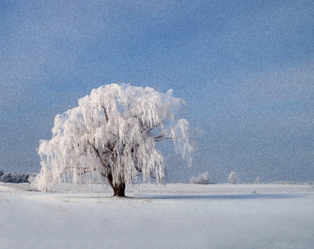 Frozen Willow With A Snowy Sky