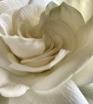 Perfume de Garden...