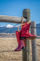 April 2021 Photo Contest 2nd Place Prize Winner
