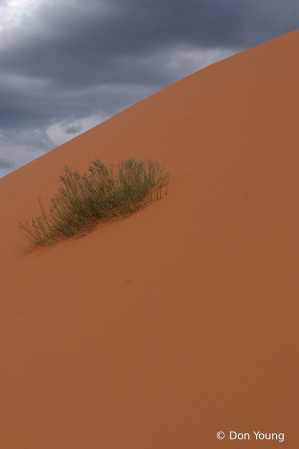 Live On A Sandpile
