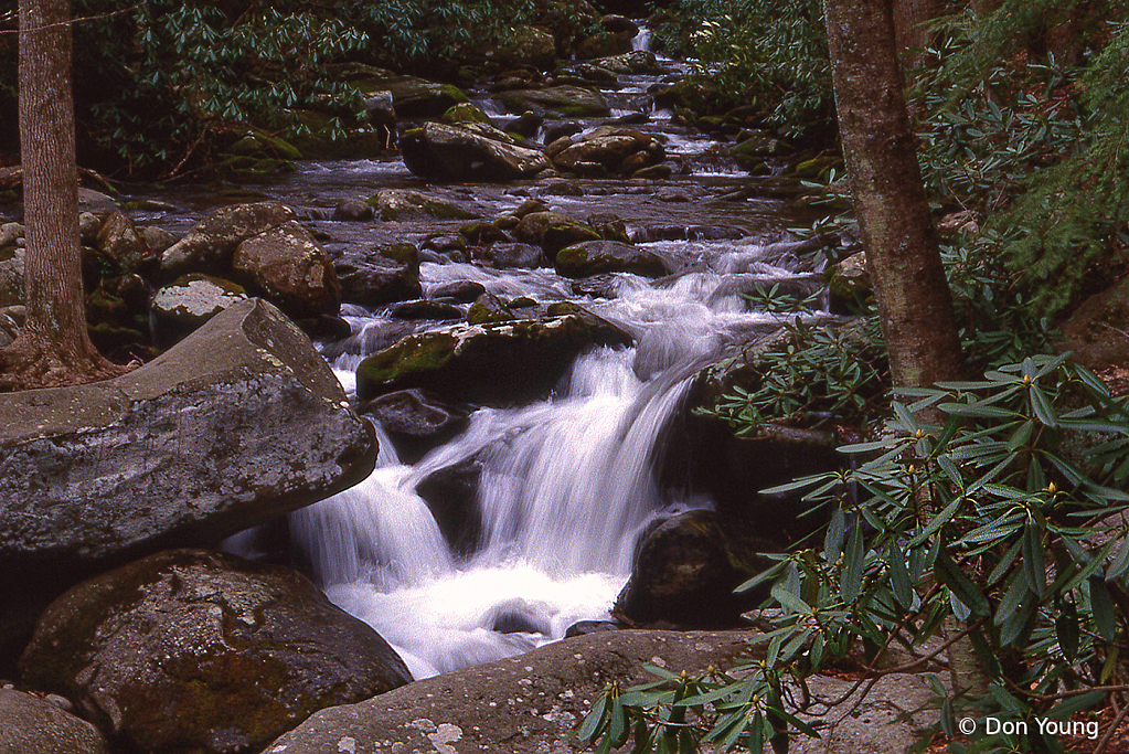 Smoky Mountain Stream - ID: 15915440 © Don Young