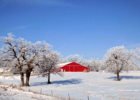 Red Barn And Hoarfrost