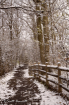 Spring Snowfall i...