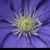 © Theresa Marie Jones PhotoID # 15917460: Beautiful Blue