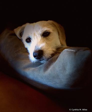 Spotlight On Sleepy