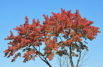 Last Autumn Treet...