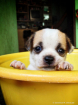 ~ ~ AT THE PUPPY ...