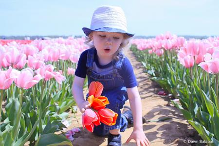 Owen Picking Flowers for Mom
