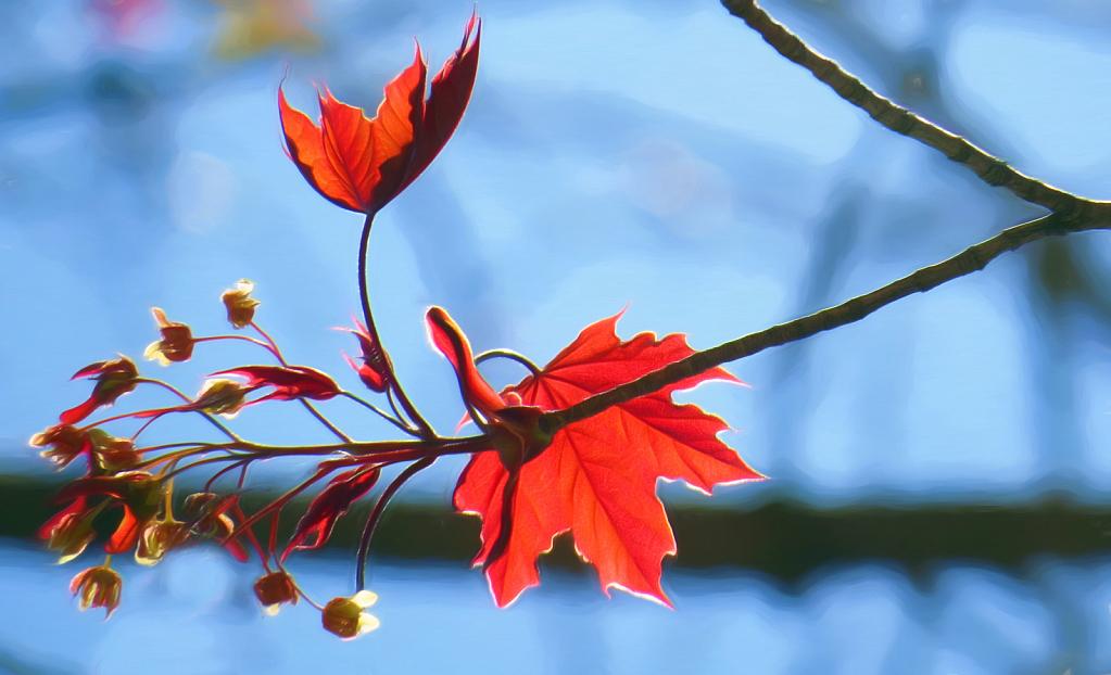 Turn Over A New Leaf - ID: 15922495 © Carolyn  M. Fletcher