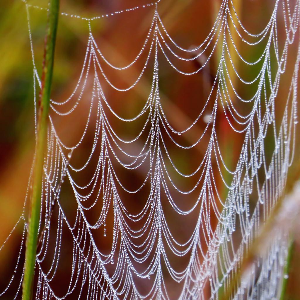 Dewy Web - ID: 15922811 © Carolyn  M. Fletcher