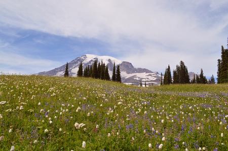 Mt Rainier Alpine Meadows