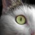 © Theresa Marie Jones PhotoID # 15923351: Cat Eyes