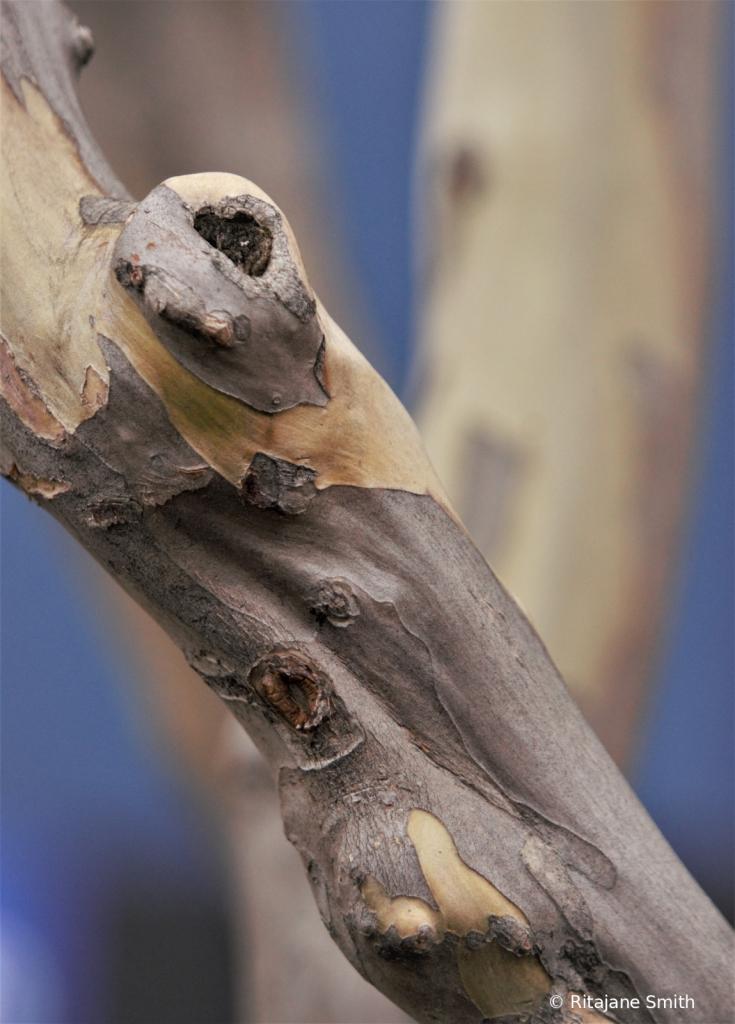 Tied up in knots - ID: 15923576 © Ritajane Smith