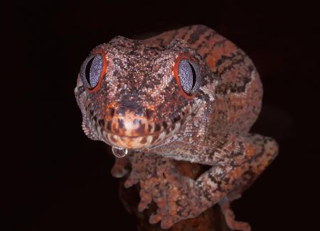 Lizard Eyes
