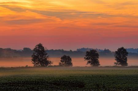 Tree Line In Foggy Sunrise