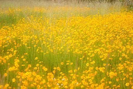 Yellow Ditchflowers