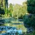 © John T. Sakai PhotoID# 15926323: Pond Reflections