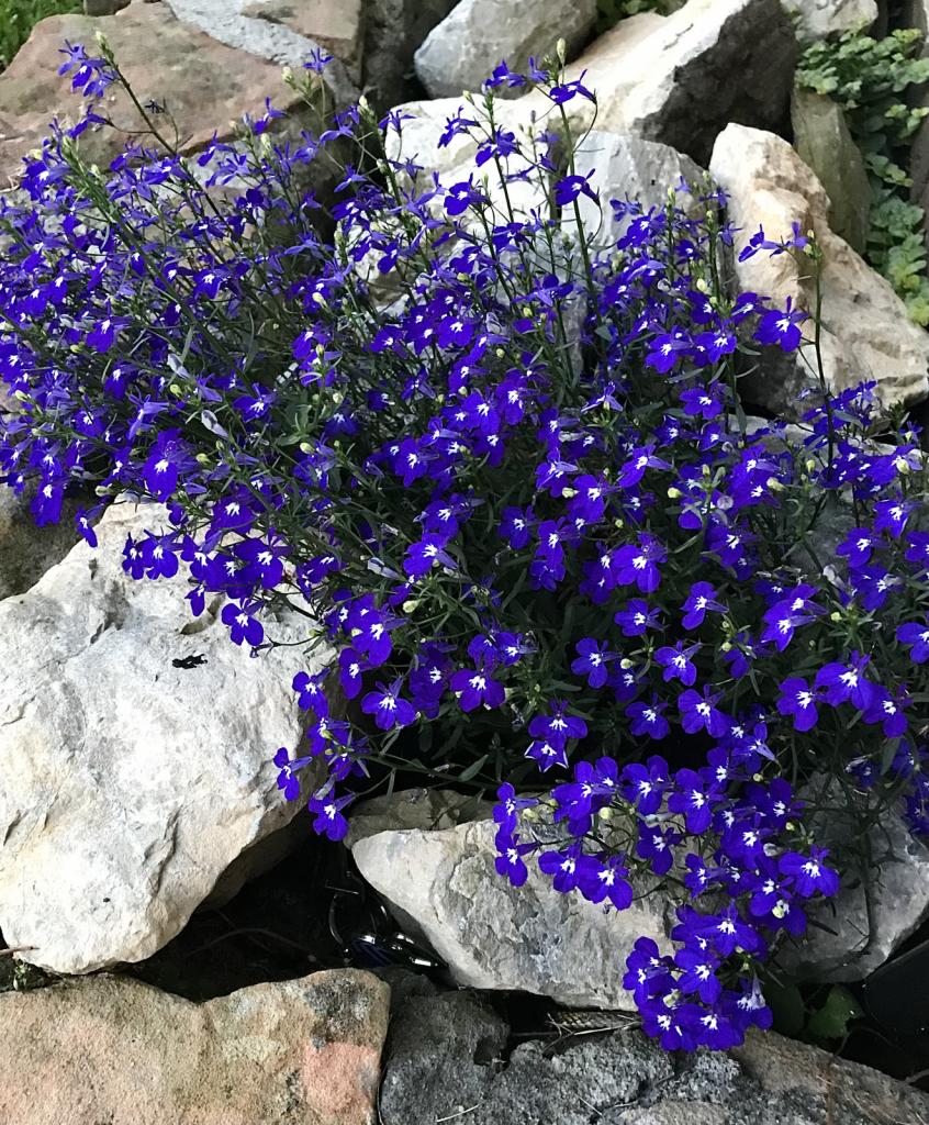 Purple beauties  - ID: 15926969 © Elizabeth A. Marker