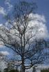 Sad tree!