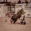 Brave cowboys
