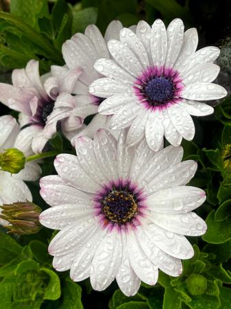 ~ ~ WET FLOWERS ~ ~