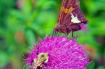 Two Pollinators