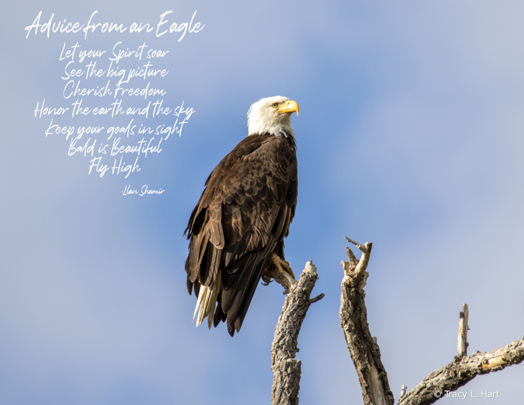 Advice from an Eagle