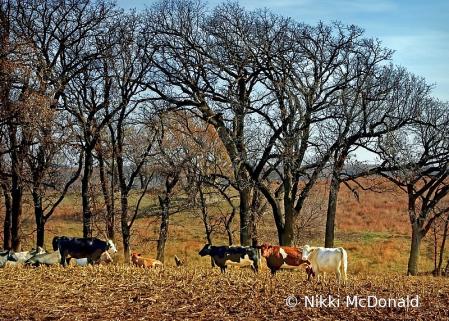 Rural Landscape - Beat the Heat