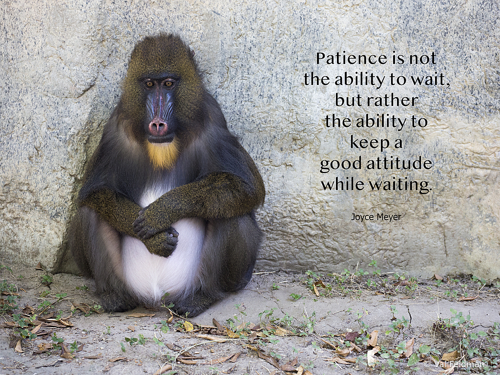 Patience Is…